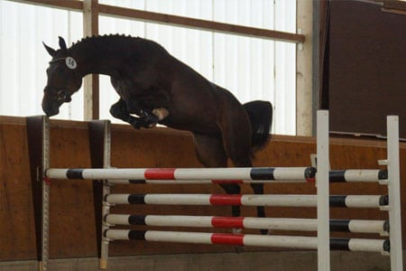 Pferdezucht